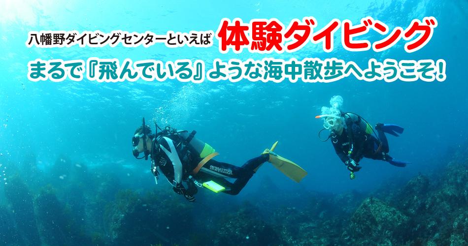 伊豆の体験ダイビング
