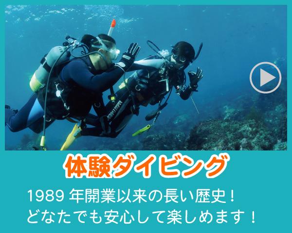 伊豆の 体験ダイビング